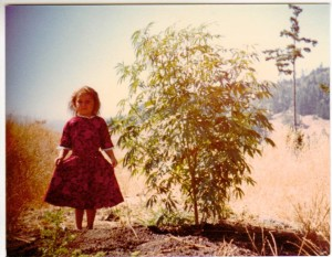 """Southern Humboldt County California, August, 1978. A volunteer sativa plant out in the meadow. For decades, families and children have lived in multiple contexts which include cannabis culture.""  -- Ursi Reynolds."