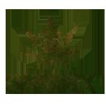 cannarex-logo