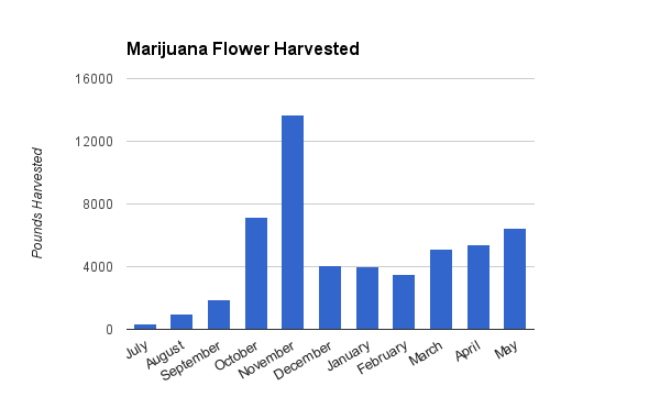 Marijuana Flower Harvested