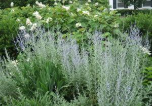 Aromatic-Plants